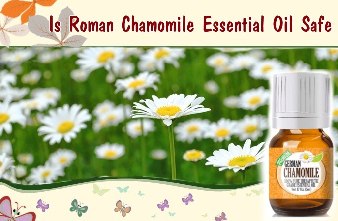 roman chamomile essential oil benefits - is roman chamomile essential oil safe