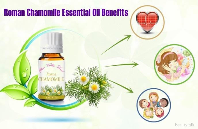 roman chamomile essential oil benefits - roman chamomile essential oil benefits